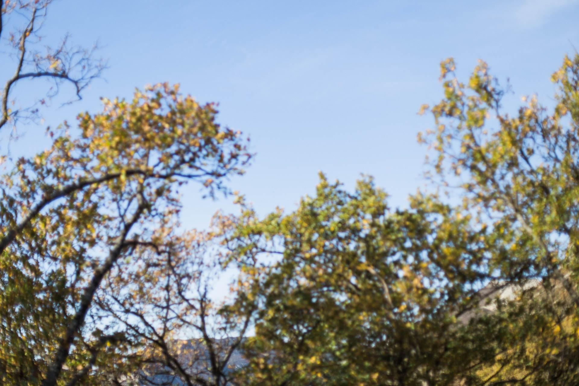 02 - Arbre automne flou