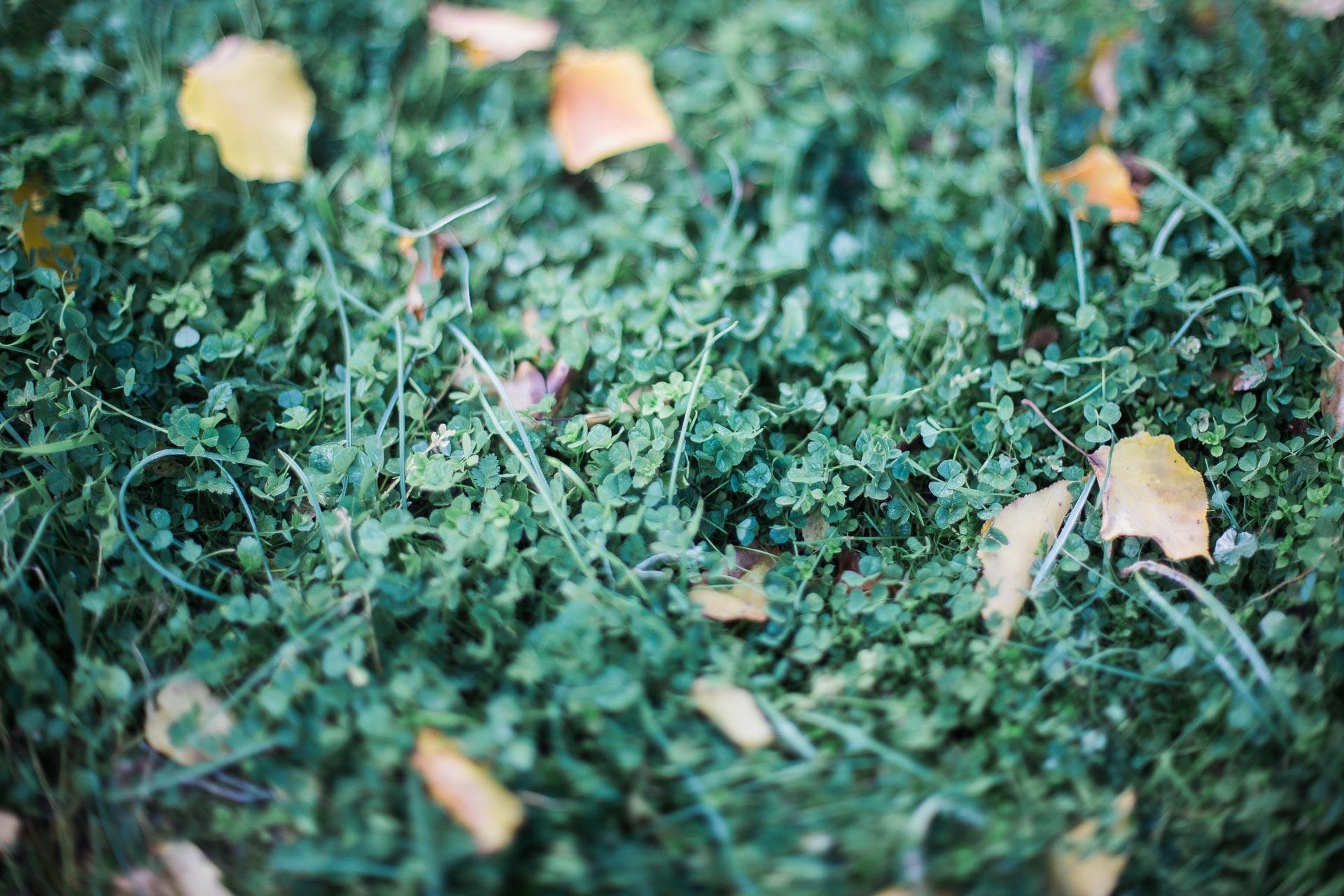 05 - Herbe et feuilles